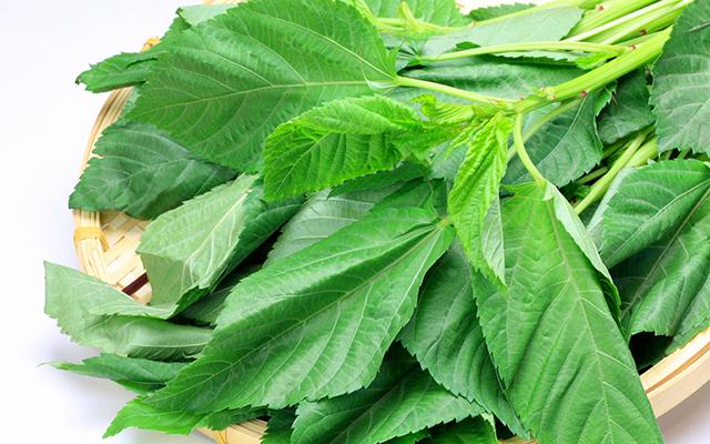 葉酸の多い食材 野菜類5つ